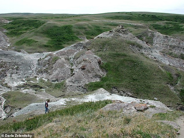 The dinosaurs, which roamed in this area of Alberta, Canada, had an internal temperature range from 95 to about 104 degrees Fahrenheit, similar to modern birds, the study found