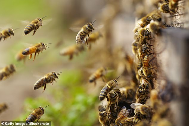 Researchers in Minnesota observed two different colonies of bees using more than 1,500 different 'waggle' dance moves to communicate with each other while flying in formation